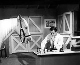 Alan Young Photo - Alan Young in a Scene From Mister Ed Supplied by SmpGlobe Photos Inc Movie Stills