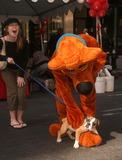 Scooby Doo Photo 1