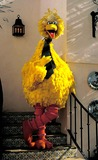 Big Bird Photo 1