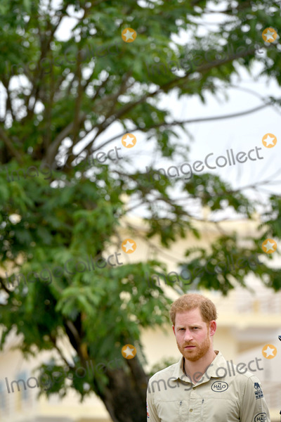 Princess of Wales Photo - 27092019 - Prince Harry Duke of Sussex in front of the Diana Tree in Huambo Angola on day five of the royal tour of Africa The Duke is visiting the minefield where his late mother Diana Princess of Wales was photographed in 1997 which is now a busy street with schools shops and houses Photo Credit ALPRAdMedia