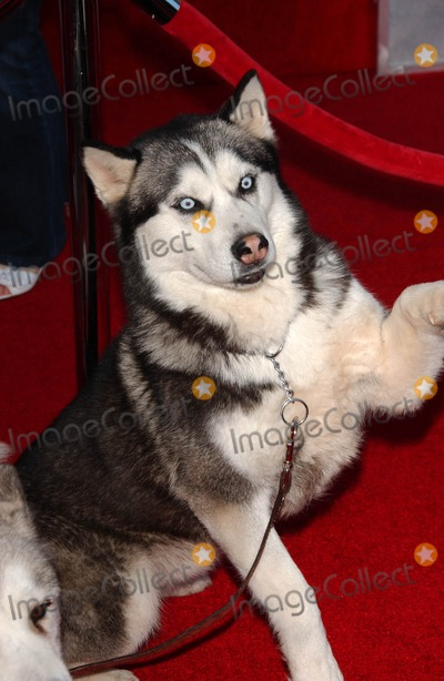 Photo - Eight Below Premiere