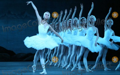 Photos From Swan Lake - Archival Pictures - PHOTOlink - 110540