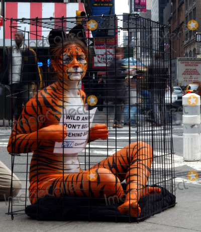 Photo - AMY JANNETTE BODY PAINTED HELPING WITH PETA
