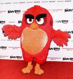 Angry Bird Photo 1